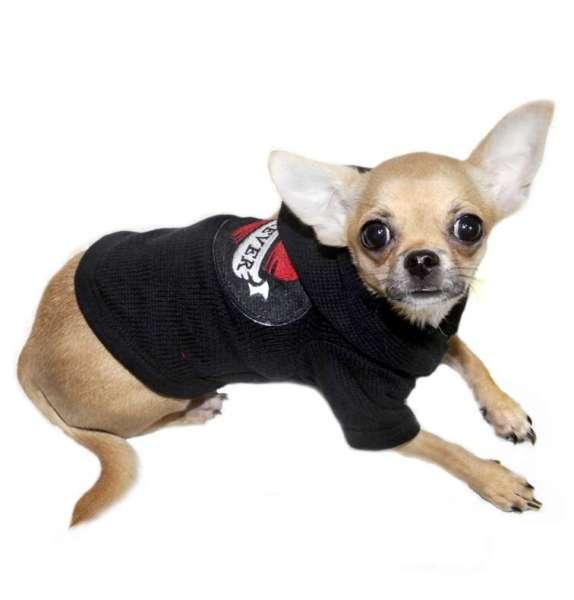 Hunde-Sweater Forever