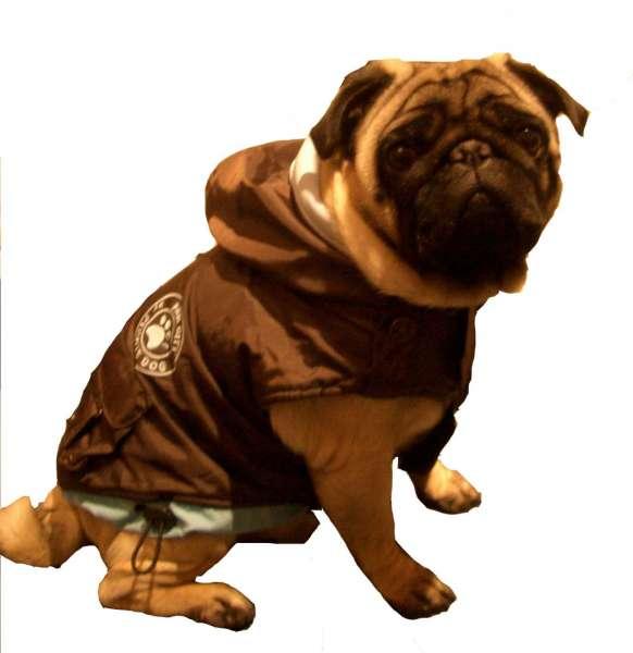 Hundemantel Paw City Choco-Hellblau