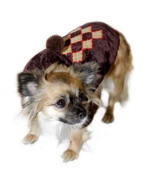 Hunde-Sweater Super Soft Argyle Brown