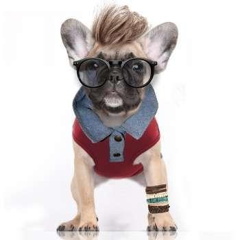 Hunde-Shirt Yolo