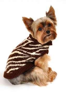 Hundepullover Super Soft Zebra