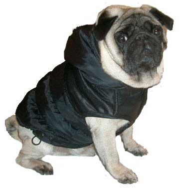 Hundebekleidung kaufen