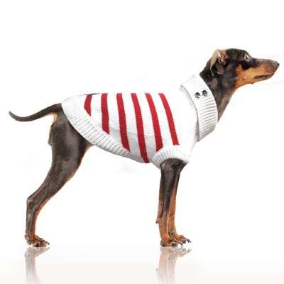 Hundepullover Gwendal - Rot
