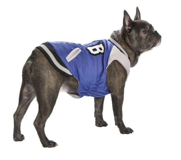 Französisch Bulldog Hundemantel College - Blue