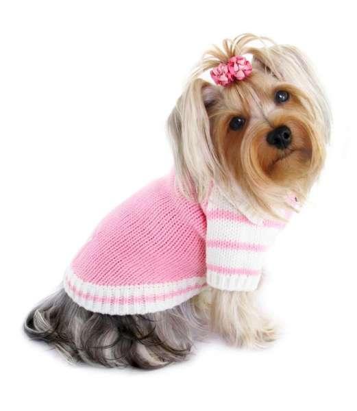 Hundepullover Lotti