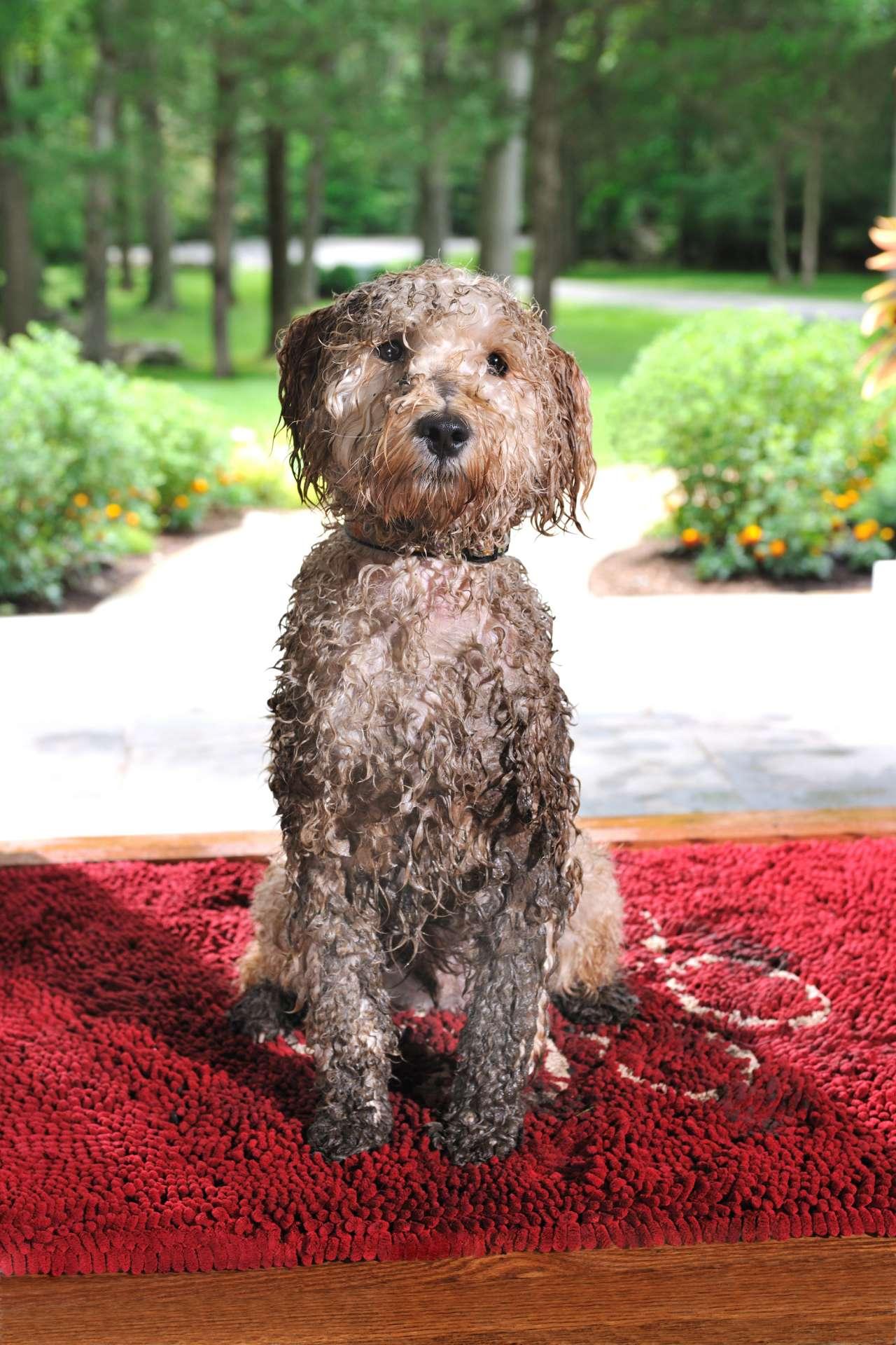 Dirty Dog Doormat In Vielen Farben Dirty Dog Doormat Online Kaufen