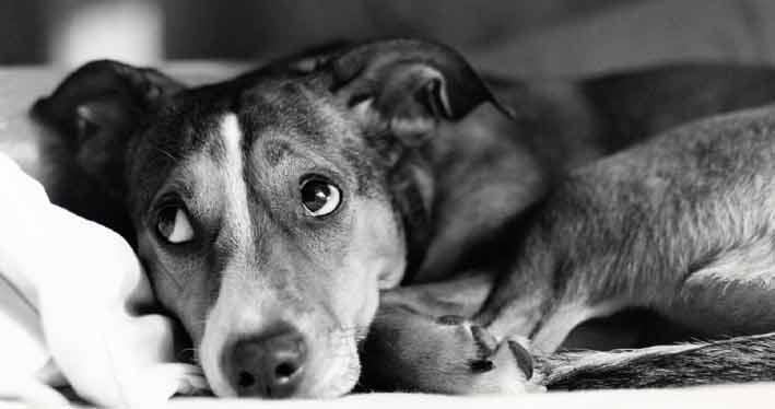 Hundedecken