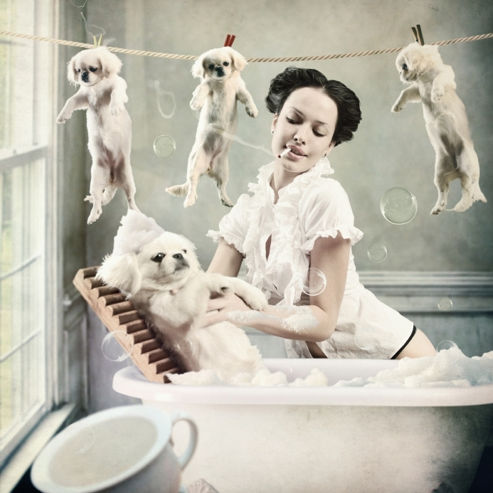 Hundepflege