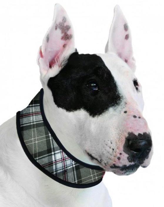 Kühlhalsbänder für Hunde